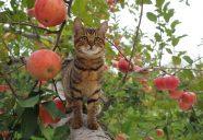 「岩合光昭の世界ネコ歩き」が映画化−「コトラ家族と世界のいいコたち」今秋公開
