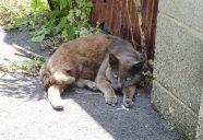 猫の石はパワーストーン?ニヤニヤが止まらない。