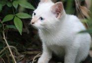6月はホタルにマムシそれと…の巻。可愛いだけじゃニャーイ!のよ、縁側ネコはねっ