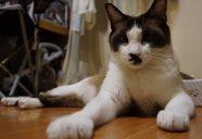 Home sweet home11 ~間取り1 −猫専用賃貸 feles 19−