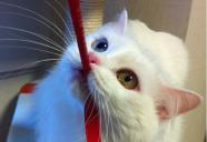 【プロおすすめ】猫ちゃんの毎日のお手入れには「●●ブラシ」♪