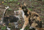 ミカン!!おっ!外見?色?大きさは関係ないのっ巻!可愛いだけじゃニャーイ!のよ、縁側ネコはねっ