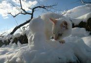暑ーいから!画像だけでも涼んでにゃの巻!可愛いだけじゃニャーイ!のよ、縁側ネコはねっ