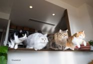 【インタビュー】4匹の猫と暮らす女性フォトグラファーMARCOさん