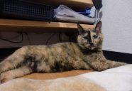 Home sweet home14 ~家相 −猫専用賃貸 feles 22−