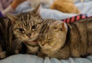 ベストセラー「猫的感覚」から学ぶ猫の幸せ