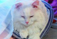 【プロが教える】猫が喜ぶスリッカーブラシの使い方