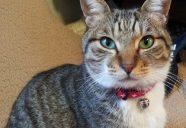 日本に猫好きはホントに多い?数字で見る最近のペット事情とは