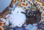 虹の橋から里帰り−猫と暮らし、猫を創る。