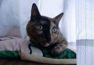 Home sweet home16 ~住宅会社の選定ポイント2-猫専用賃貸 feles 24-