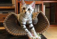 猫がトイレを気に入らない!何が原因? キャットシッターねこよろず相談