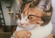 名前はまだニャイ。猫のヒゲが生えた部分、正式名称を知っていますか?