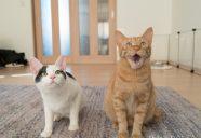 猫と家族の写真展 〜君たちはもう保護猫じゃない〜