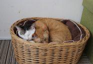 猫も人も幸せになるお祭り『にゃんぶまつり』in 盛岡