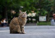 野良猫へのジレンマ 〜殺処分ゼロのその先へ〜