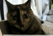 住宅ローン1 −猫専用賃貸 feles 28−