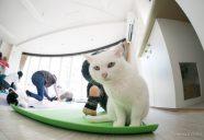 保護猫カフェでネコヨガ 〜のび猫ストレッチで猫になる〜