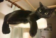 ジジが家族になった日−黒猫大家奮闘記 5