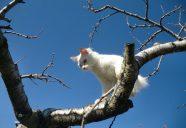 シロさんの巻!可愛いだけじゃニャーイ!のよ、縁側ネコはねっ