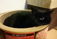 今年も猫年です。−黒猫大家奮闘記 6