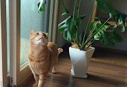 猫には危険?お花に観葉植物、家庭内の誤食を防ごう