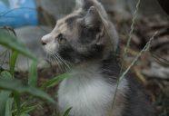 ま~年末なので!!縁側ネコ コレクションを!可愛いだけじゃニャーイ!のよ、縁側ネコはねっ