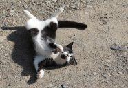 砂の悲劇の巻!可愛いだけじゃニャーイ!のよ、縁側ネコはねっ