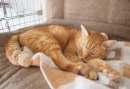 猫の腫瘍について-いざという時のための基礎知識-②