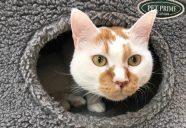 目指すは日本で一番衛生的で猫に優しい保護施設!