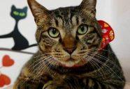 猫を売らない猫のお店のオンラインショップ