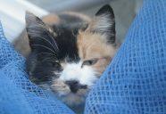 ぽんぽこじゃな~い!のよ、TANUKIはねっ!の巻!可愛いだけじゃニャーイ!のよ、縁側ネコはねっ