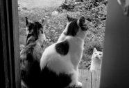縁側ネコ写真の巻!可愛いだけじゃニャーイ!のよ、縁側ネコはねっ