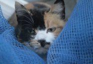 ミケさん!!の巻!可愛いだけじゃニャーイ!のよ、縁側ネコはねっ