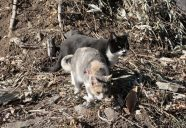 緩衝生物としての縁側ネコの巻!可愛いだけじゃニャーイ!のよ、縁側ネコはねっ