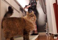 妊婦さん必見。猫の感染症予防について、獣医師がぶっちゃけます!−その⑤