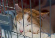多頭崩壊から保護猫へ。そして家族へ 〜埼玉県川越保健所譲渡会〜