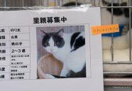 埼玉県庁で犬と猫の譲渡会初開催