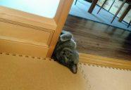 東京で「楽しい猫ごはん、美味しい人ごはん」イベントやります!
