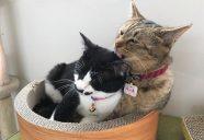 もりおか動物愛護センター応援基金にご支援お願いいたします!