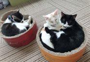 イオンモール盛岡南店で、もりねこ初の保護猫譲渡会!