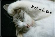 まやちぐらの秘密を大公開!−猫専用アパートin 沖縄
