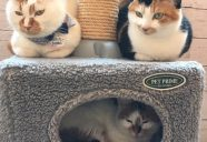 猫大好き!な、お友だち集まれ ~もりねこフレンズ大募集~