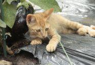 野生動物被害地域の方々の視察の巻!可愛いだけじゃニャーイ!のよ、縁側ネコはねっ