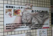仙台の保護猫シェルター「おうちにおいで」