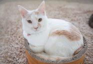 目指せ保護猫の地産地消!−北上市で「保健所ねこ」の譲渡会