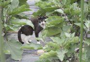 ホタルの季節っの巻!!可愛いだけじゃニャーイ!のよ、縁側ネコはねっ