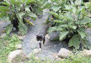 縁側ネコは野菜で驚かない?の巻!!可愛いだけじゃニャーイ!のよ、縁側ネコはねっ
