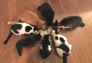 【法律相談5】猫に遺産を残すには?