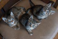 今年の仔猫はキジトラが多い?