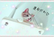 「最強のカベ」との運命の出会い−猫専用アパートまやちぐら